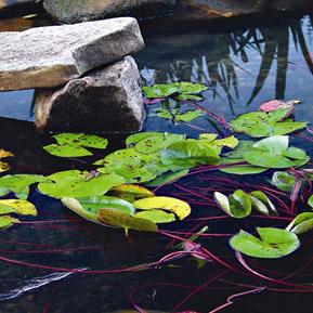Wiosenny start oczka wodnego
